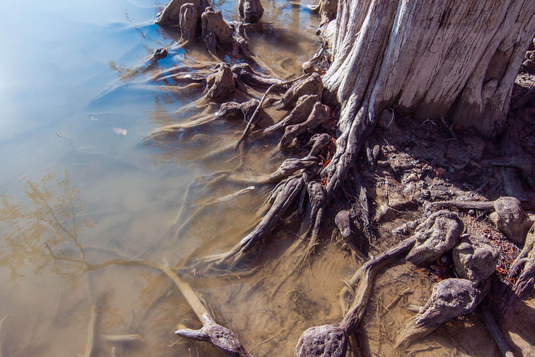 кипарисовое озеро