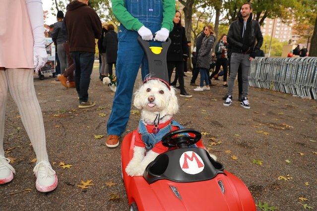 собачий парад