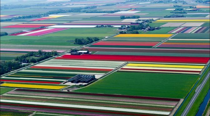 Пролетая над тюльпановыми полями