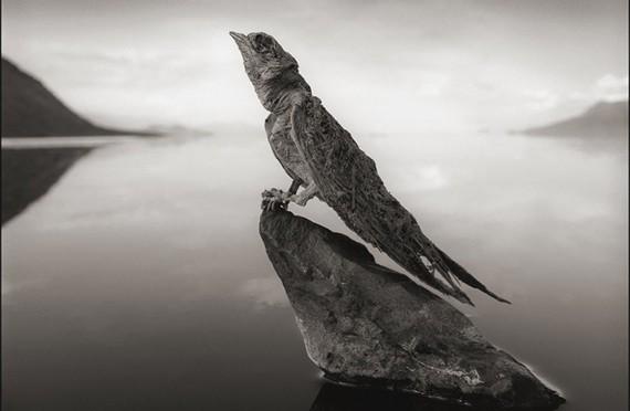 птица на озере