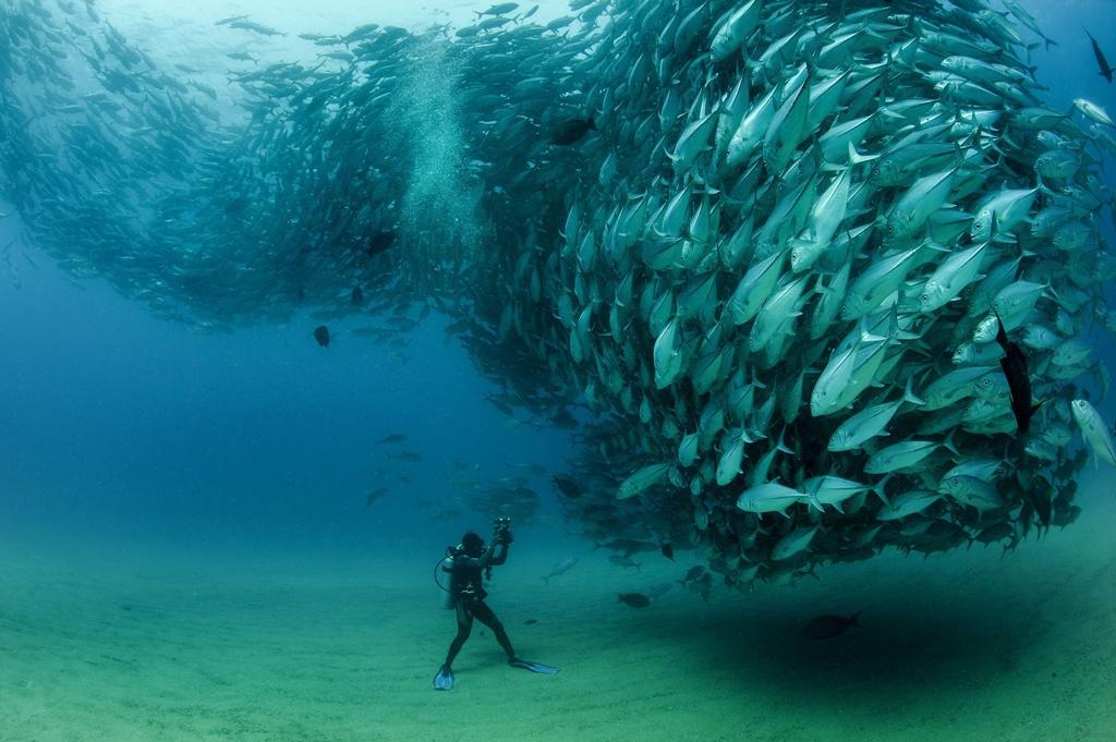 рыбное торнадо