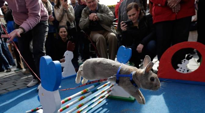 Состязания пасхальных кроликов