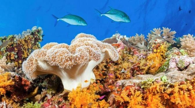 Большой Барьерный Риф. Удивительная красота природы