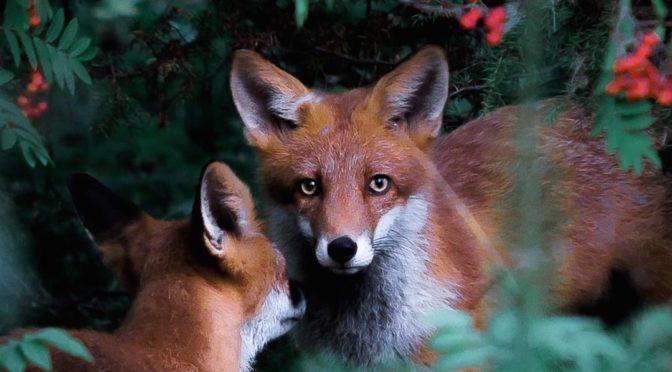 Сказочная серия «В дикой природе Финляндии»