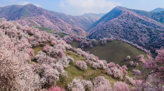 абрикосовая долина
