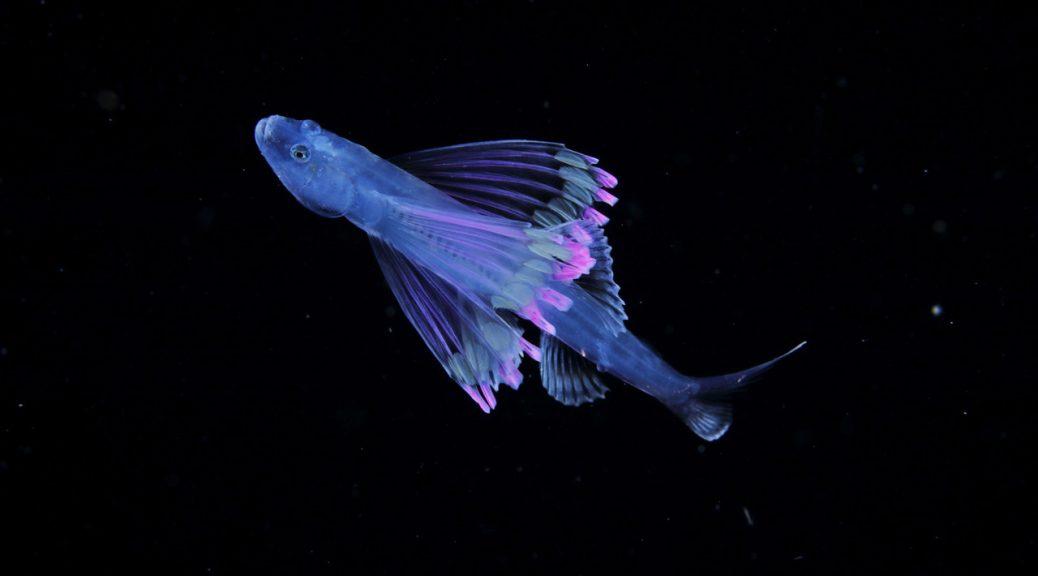 японский планктон