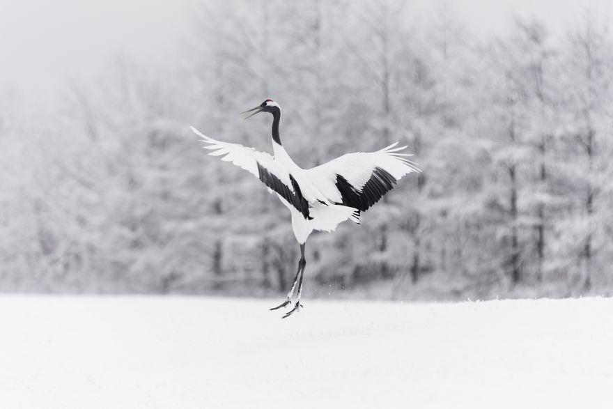 зимний танец