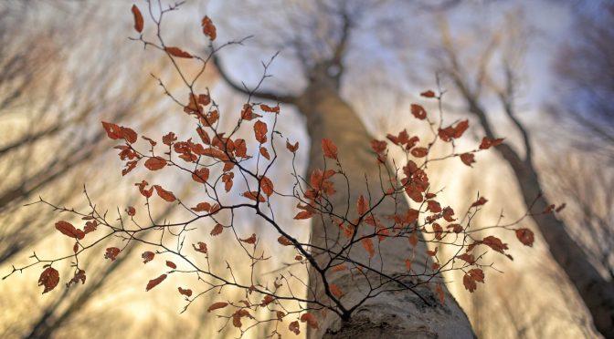Красота лесов Казентино