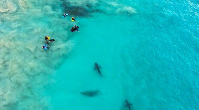 Акулы в волнах: невероятные фотографии Шона Скотта