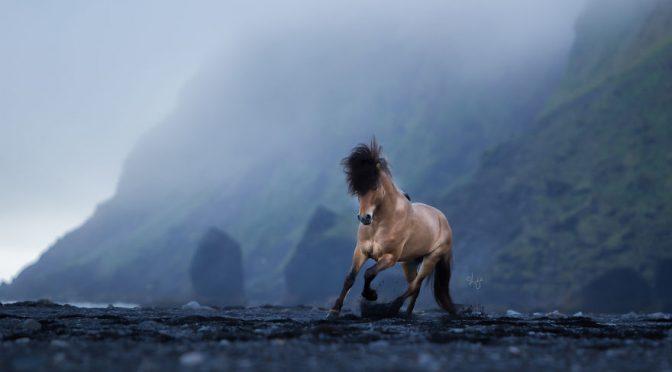 Лошади на фоне пейзажей Исландии